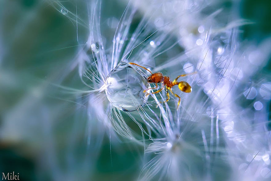 Macro-Photography-Miki-Asai-Infographic-BLOG-1